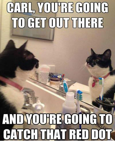 self-motivation-cat-meme